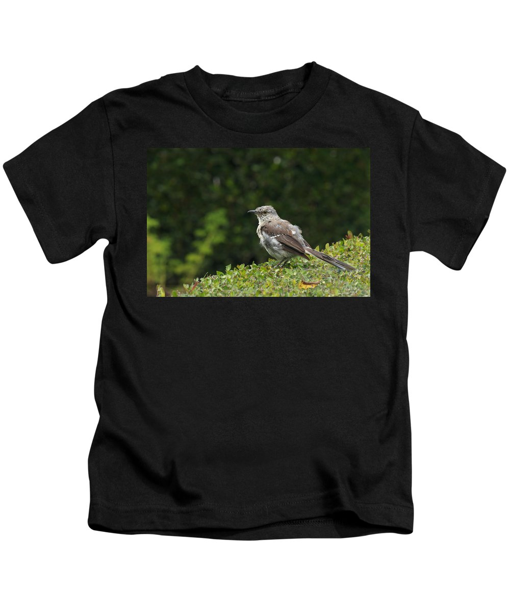 Aviary Kids T-Shirt featuring the photograph Bird On The Hedges by Travis Rogers