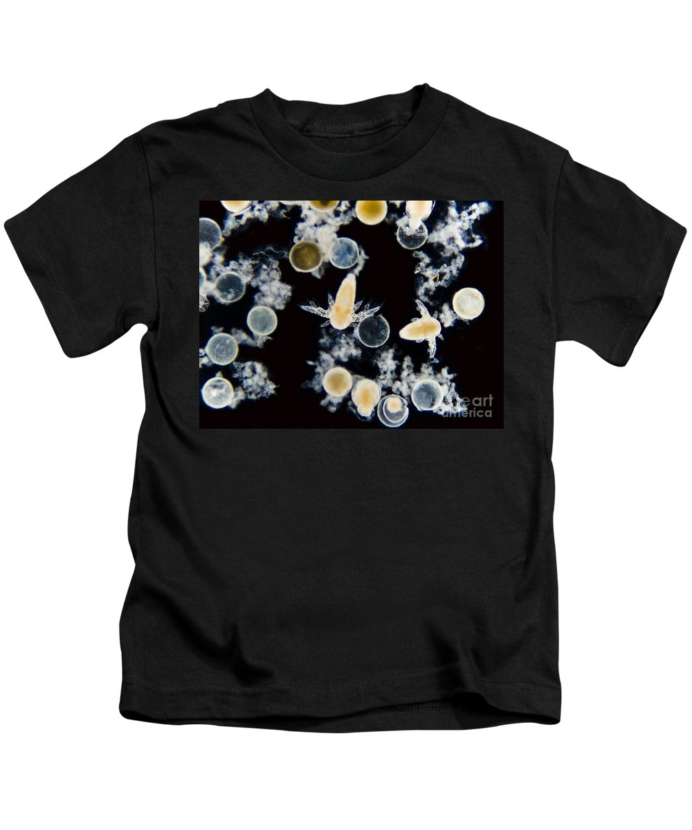 Science Kids T-Shirt featuring the photograph Brine Shrimp Artemia Salina, Lm by Rub�n Duro/BioMEDIA ASSOCIATES LLC