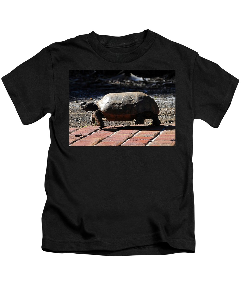 Gopher Tortoise Kids T-Shirt featuring the photograph Florida Gopher Tortoise by David Lee Thompson