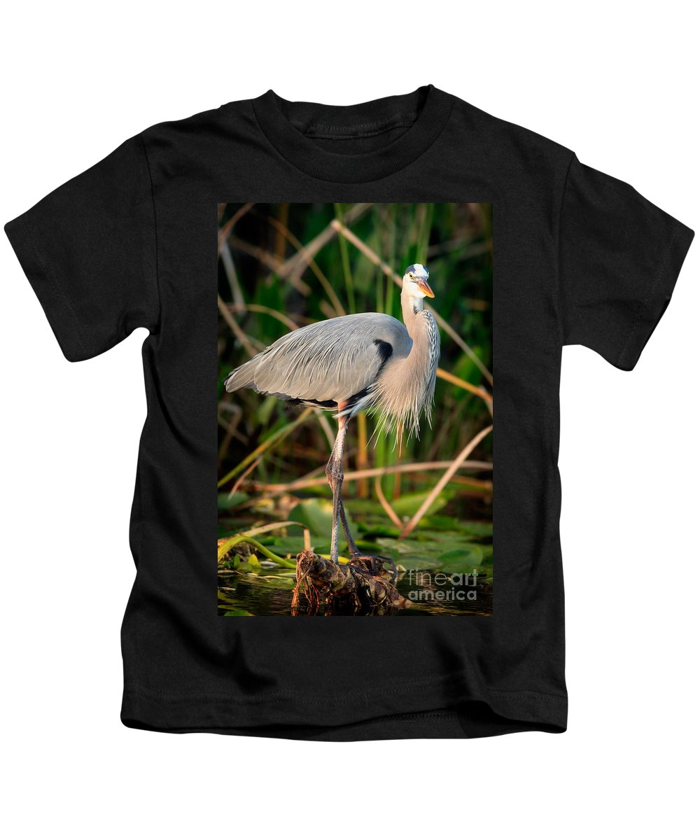Great Blue Heron Kids T-Shirt featuring the photograph Great Blue Heron by Matt Suess