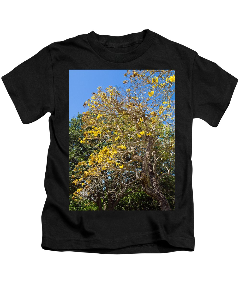 Florida; Tree; Plant; Flower; Flowering; Blossom; Blossoming; Jerusalem; Thorn; Possom; Mexican; Pal Kids T-Shirt featuring the photograph Jerusalem Thorn Tree by Allan Hughes