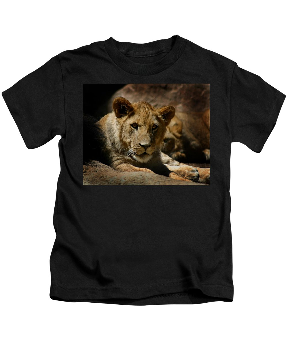 Lion Kids T-Shirt featuring the photograph Lion Cub by Anthony Jones