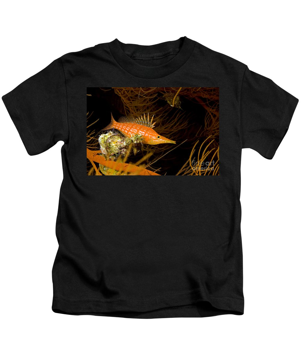 Animal Art Kids T-Shirt featuring the photograph Longnose Hawkfish by Dave Fleetham - Printscapes