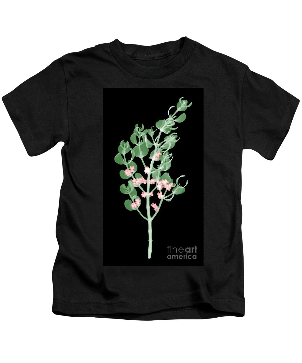 Aphrodisiac Kids T-Shirt featuring the photograph Pacific Mistletoe, Phoradendron by Ted Kinsman