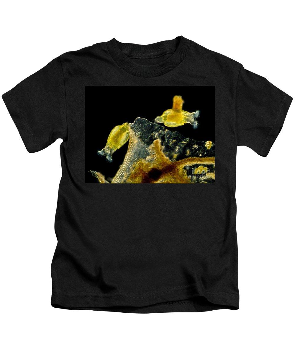 Science Kids T-Shirt featuring the photograph Rotifers Philodina Sp., Lm by Rub�n Duro/BioMEDIA ASSOCIATES LLC