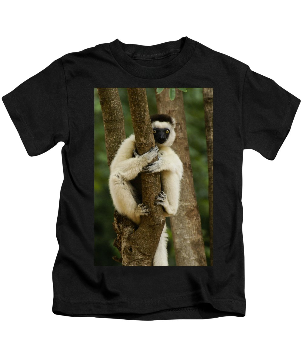 Madagascar Kids T-Shirt featuring the photograph Verreaux's Sifaka by Michele Burgess