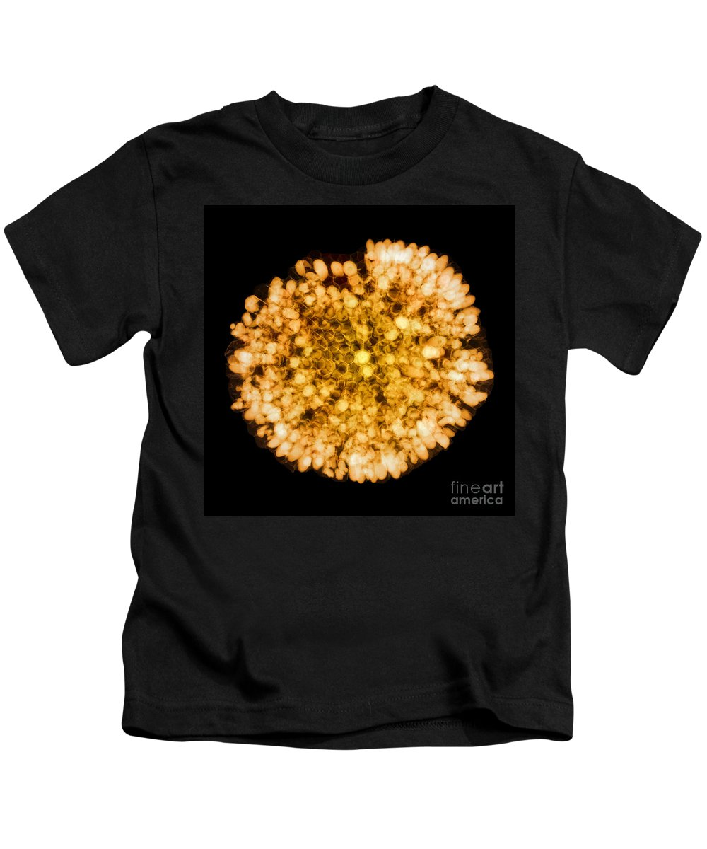 Science Kids T-Shirt featuring the photograph Wasp Nest, X-ray by Ted Kinsman