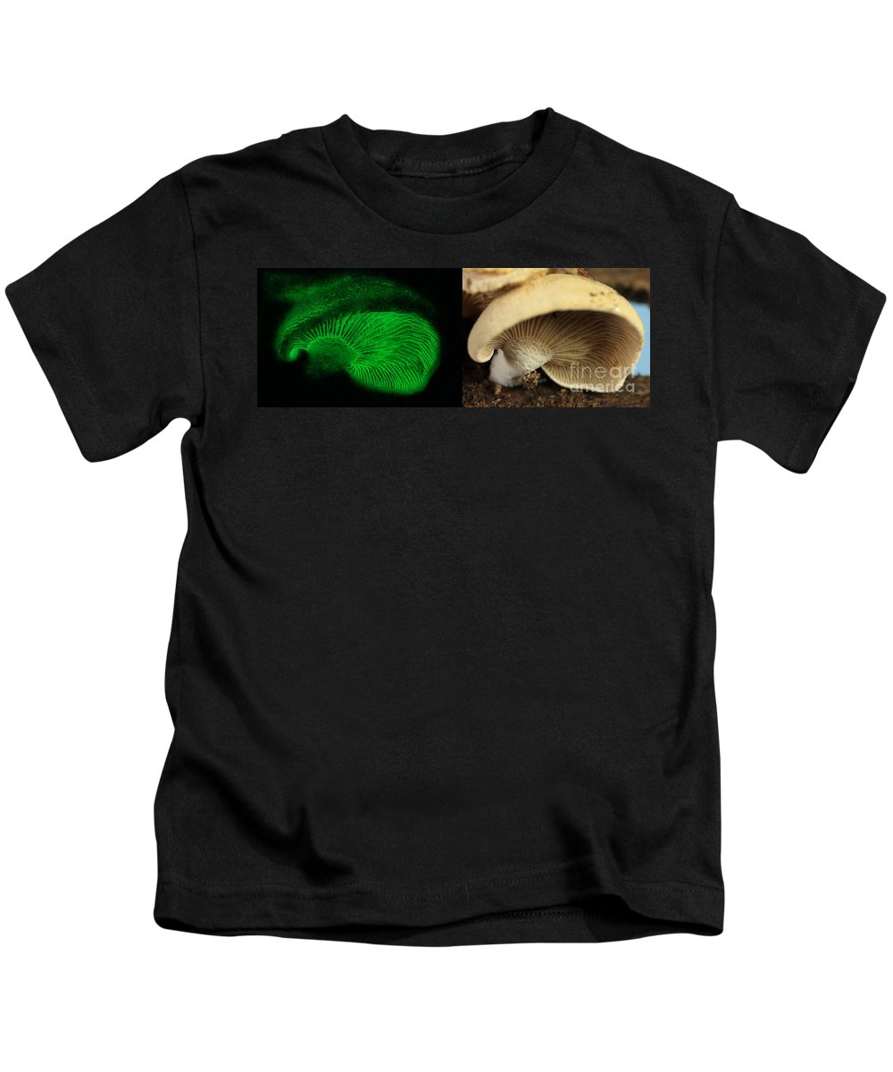 Luminescent Kids T-Shirt featuring the photograph Luminescent Mushroom, Panellus Stipticus by Ted Kinsman
