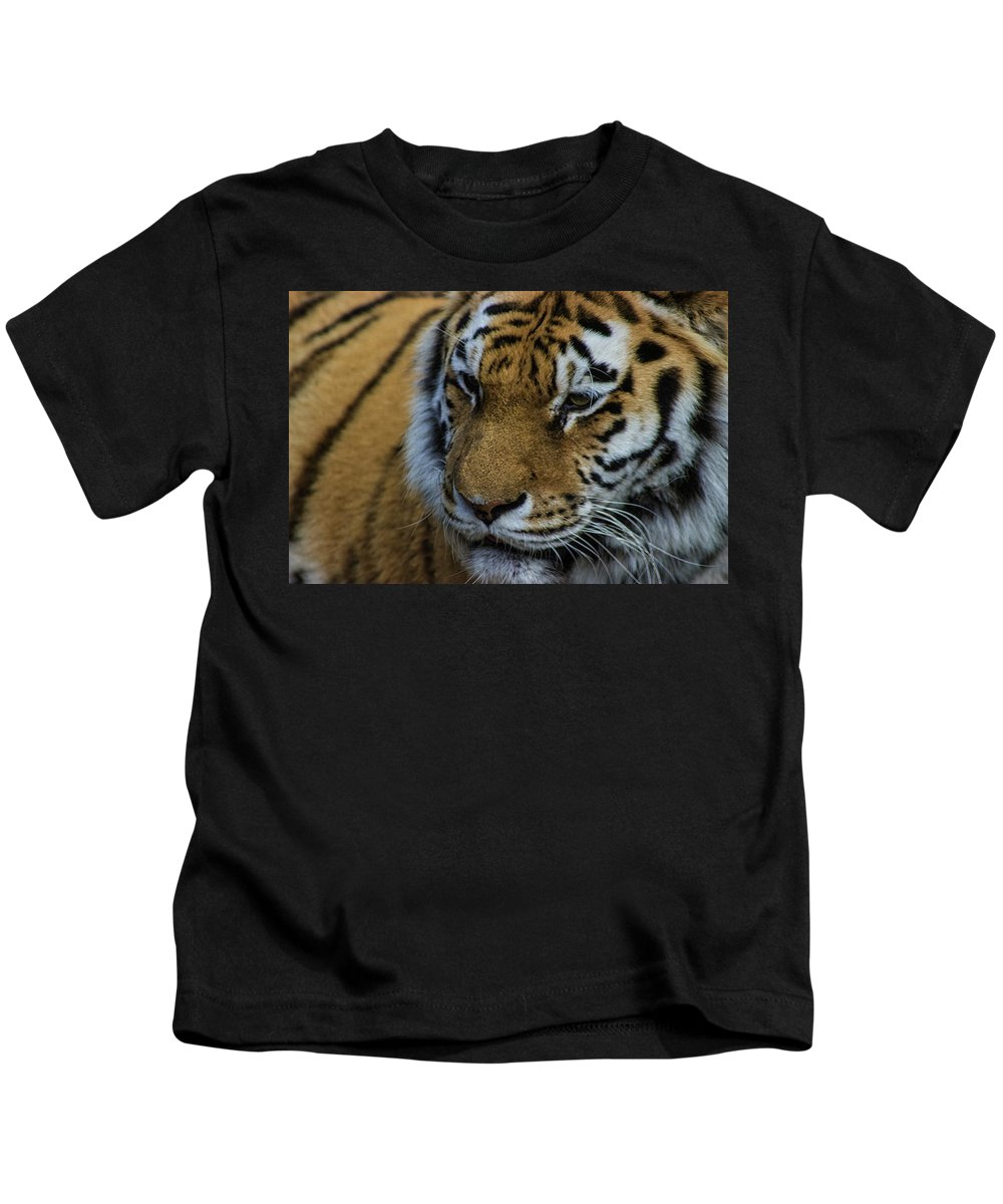 Tiger Kids T-Shirt featuring the photograph Amur Tiger by Martin Newman