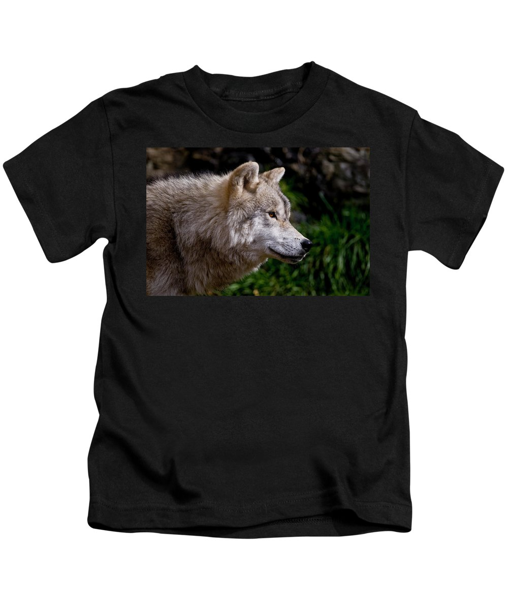 Michael Cummings Kids T-Shirt featuring the photograph Arctic Wolf Portrait by Michael Cummings