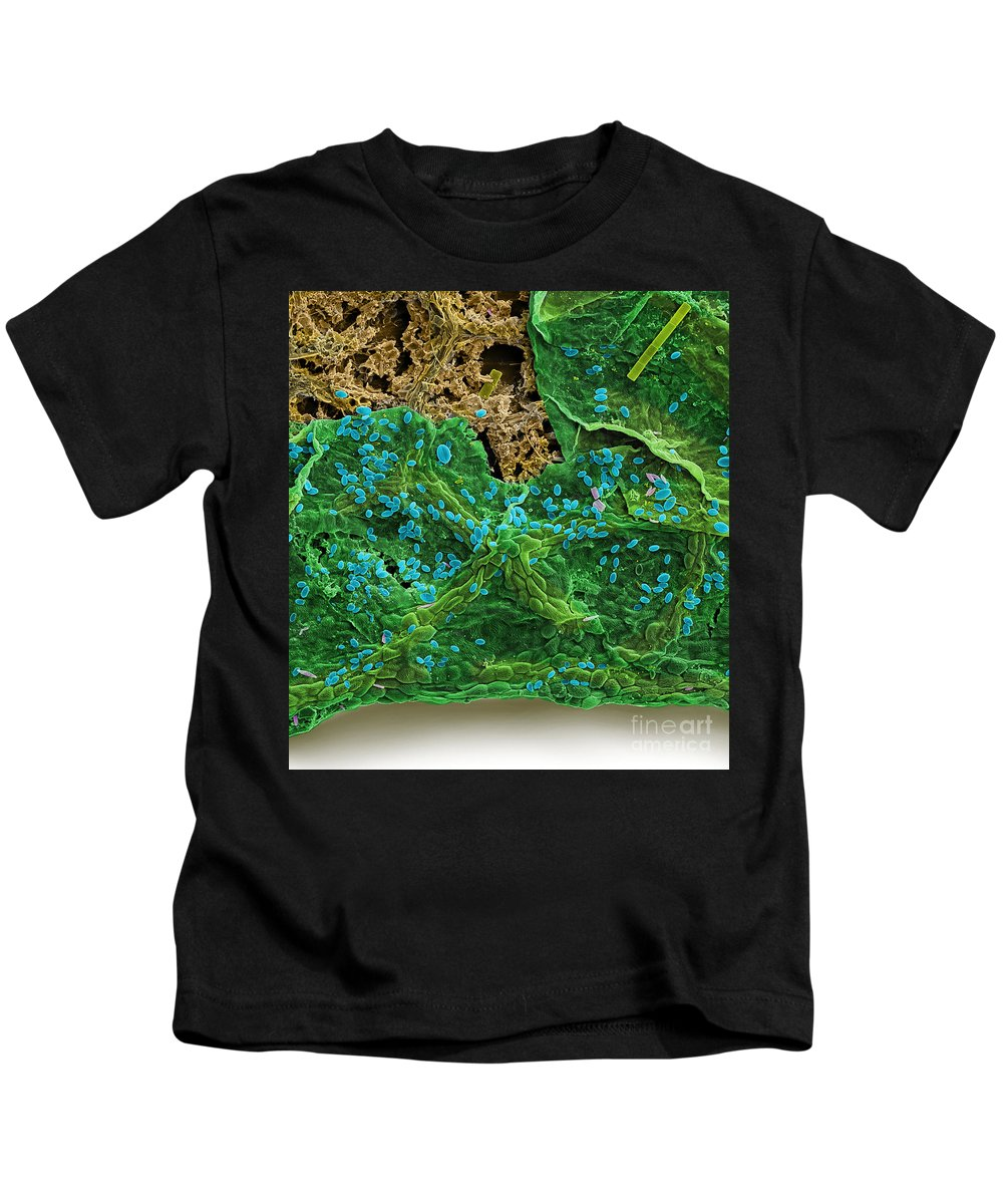 Diatom Kids T-Shirt featuring the photograph Diatoms Eating A Maple Leaf by Ted Kinsman