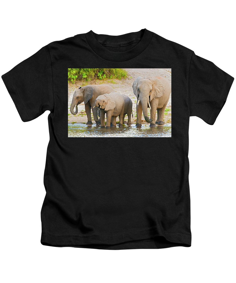 Chobe River Kids T-Shirt featuring the photograph Elephants At The Bank Of Chobe River In Botswana by Marek Poplawski