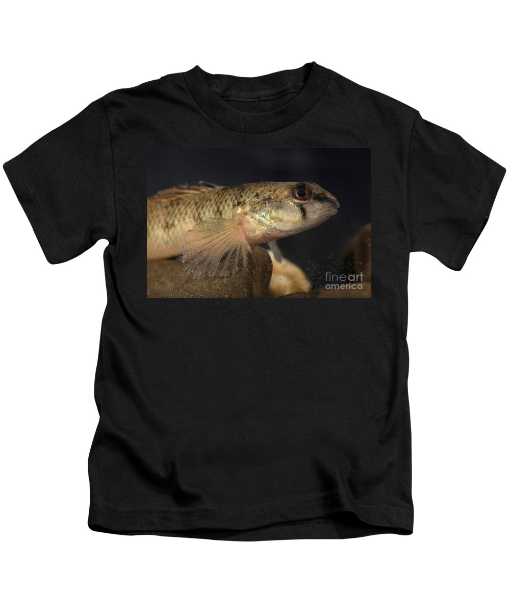 Animal Kids T-Shirt featuring the photograph Mobile Logperch Percina Kathae by Ted Kinsman