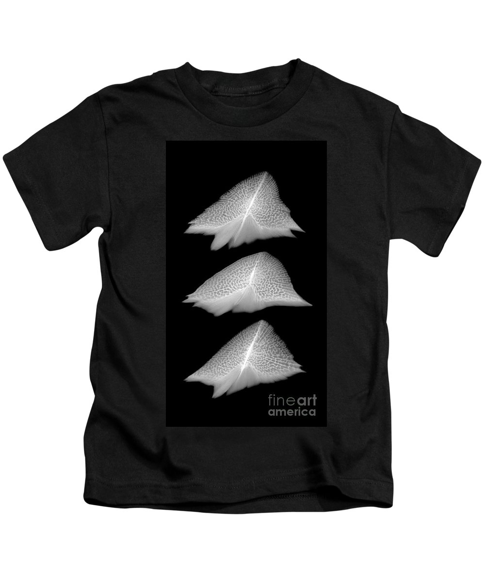 Science Kids T-Shirt featuring the photograph Sturgeon Scales, X-ray by Ted Kinsman
