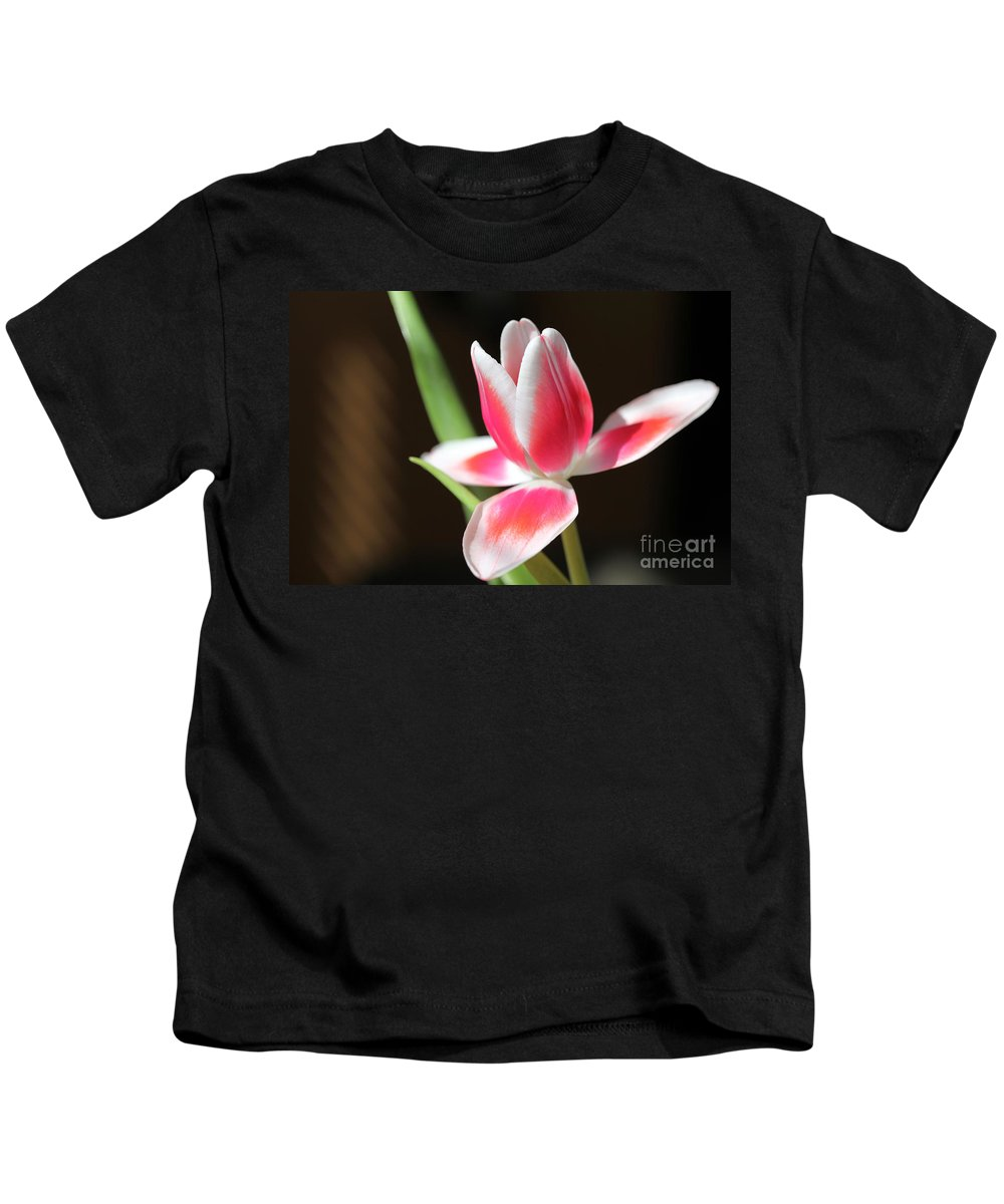 Tags: Kids T-Shirt featuring the photograph Tulip by Amanda Barcon
