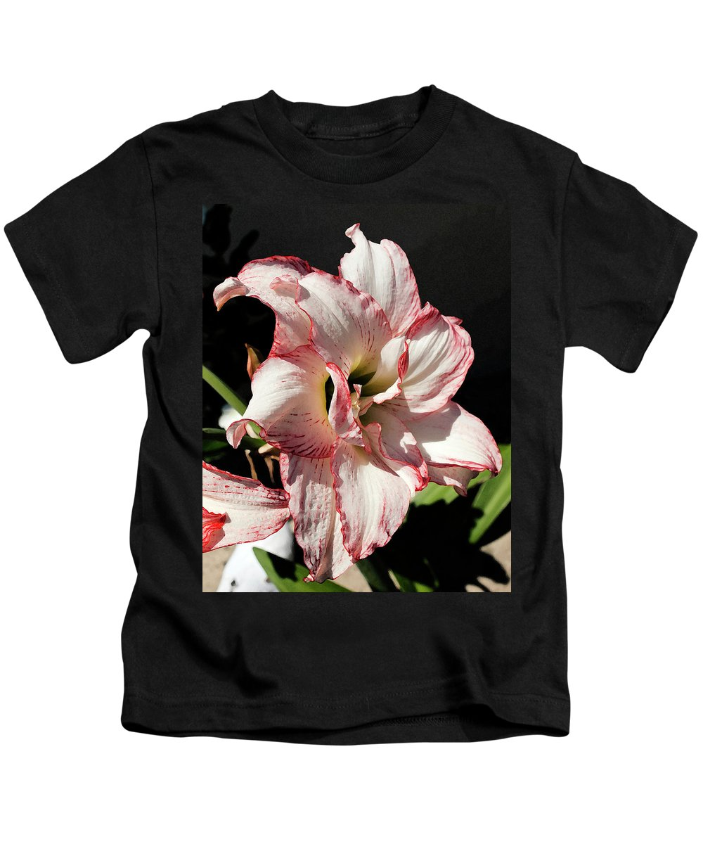 Amaryllidaceae Kids T-Shirt featuring the painting Amaryllidaceae Hippeastrum Amorice by Allan Hughes