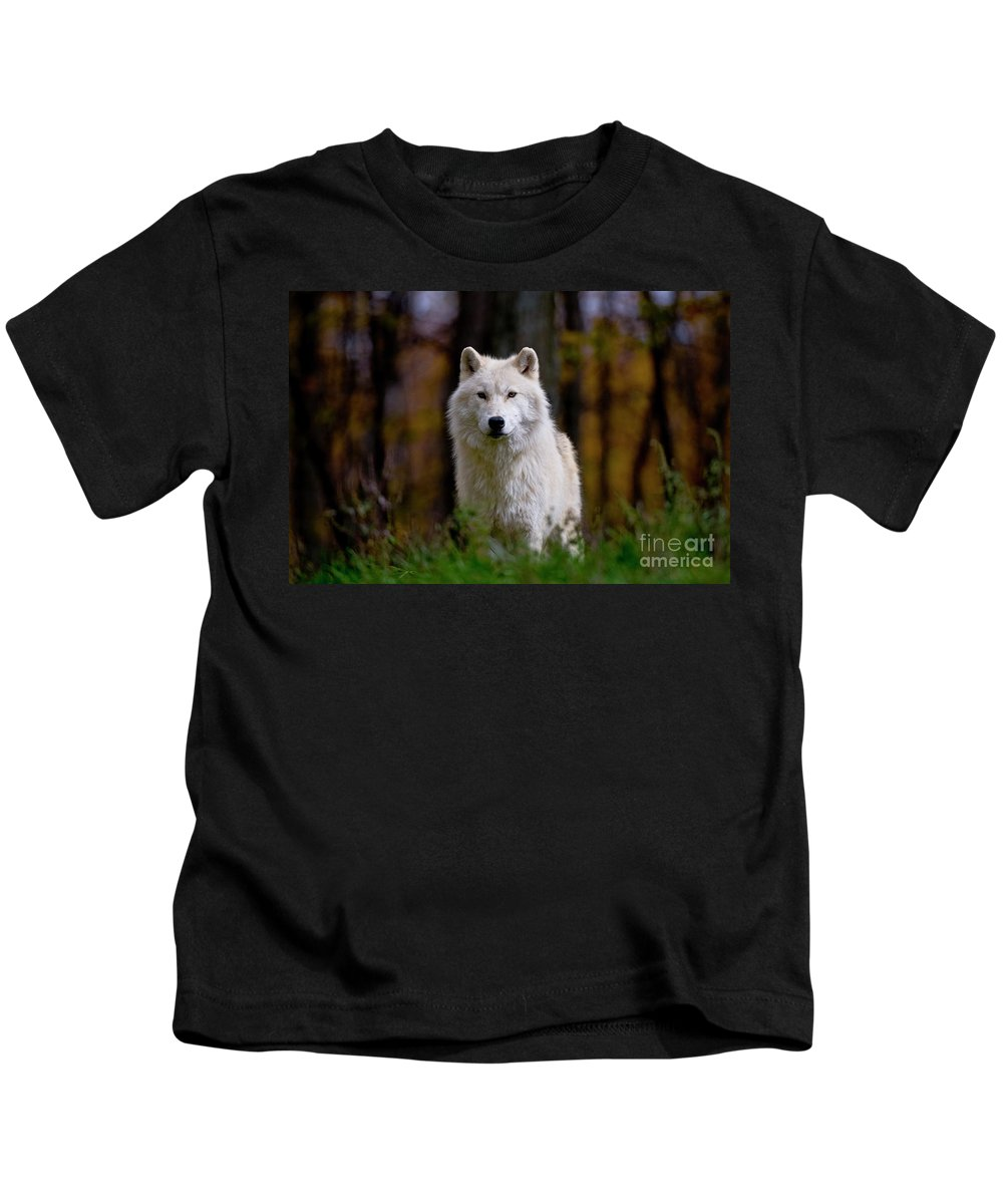 Michael Cummings Kids T-Shirt featuring the photograph Arctic Wolf by Michael Cummings