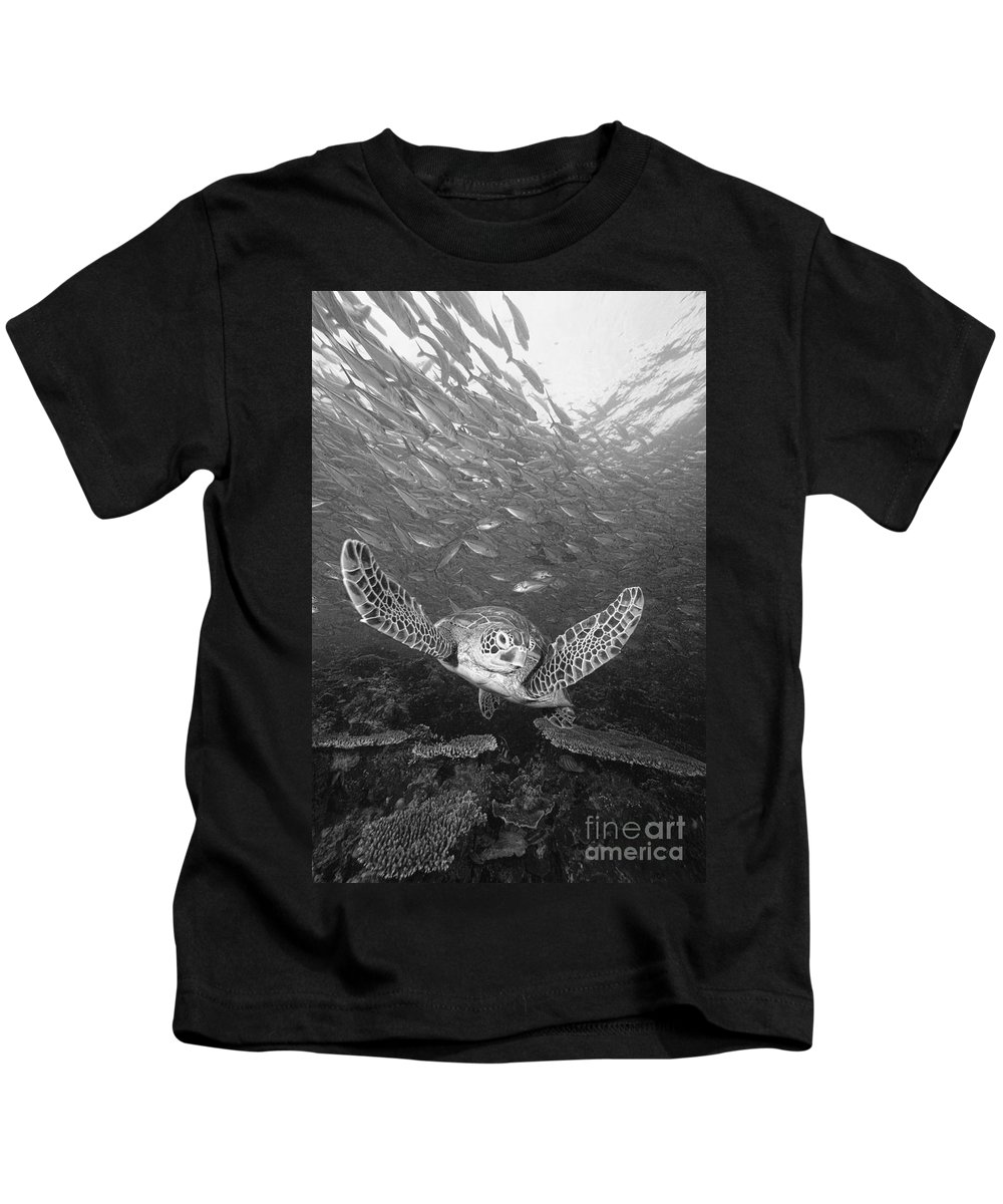 Animal Art Kids T-Shirt featuring the photograph Green Sea Turtle by Dave Fleetham - Printscapes