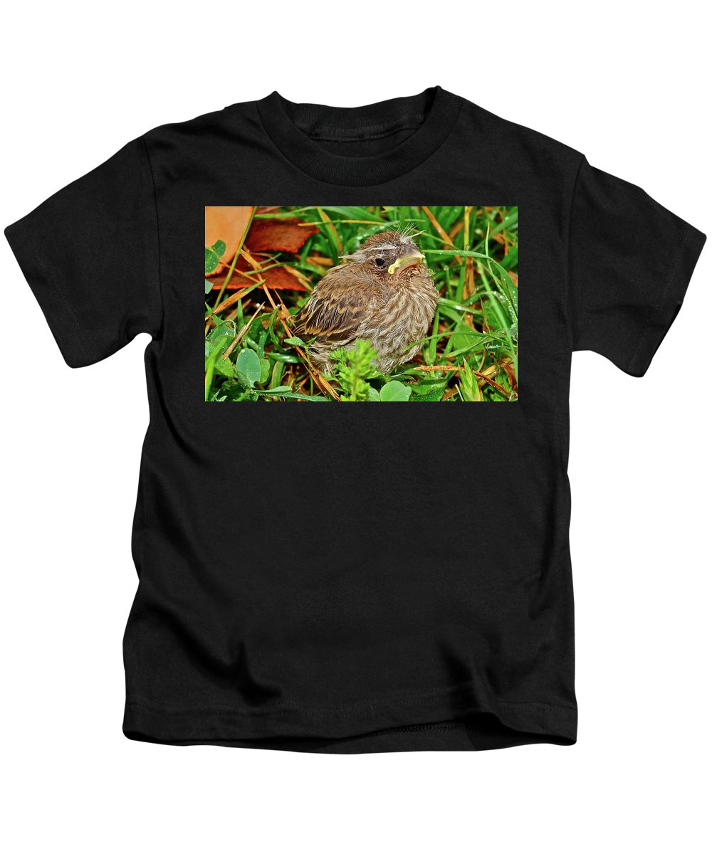 Bird Kids T-Shirt featuring the photograph All Alone by Diana Hatcher