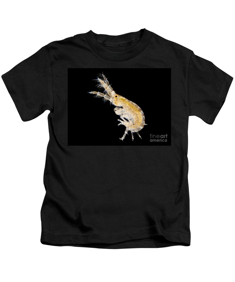 Science Kids T-Shirt featuring the photograph Amphipod Crustacean, Lm by Rub�n Duro/BioMEDIA ASSOCIATES LLC