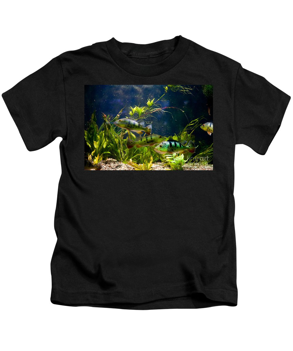 Zoo Kids T-Shirt featuring the photograph Aquarium Striped Fishes Group by Arletta Cwalina