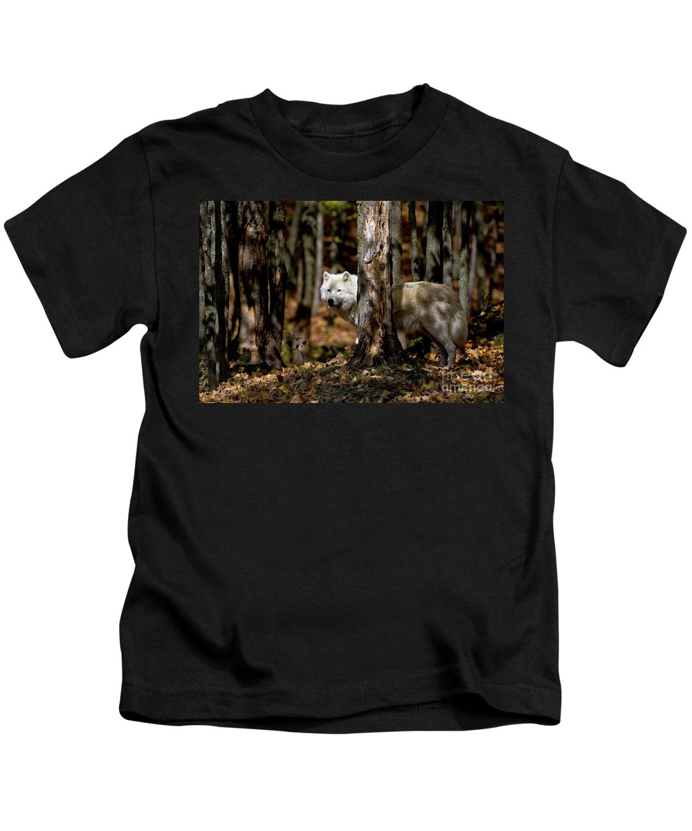 Michael Cummings Kids T-Shirt featuring the photograph Arctic Wolf In Forest by Michael Cummings
