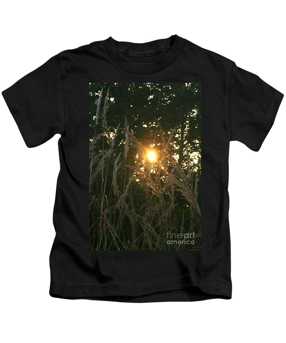 Light Kids T-Shirt featuring the photograph Autumn Grasses in the Morning by Nadine Rippelmeyer