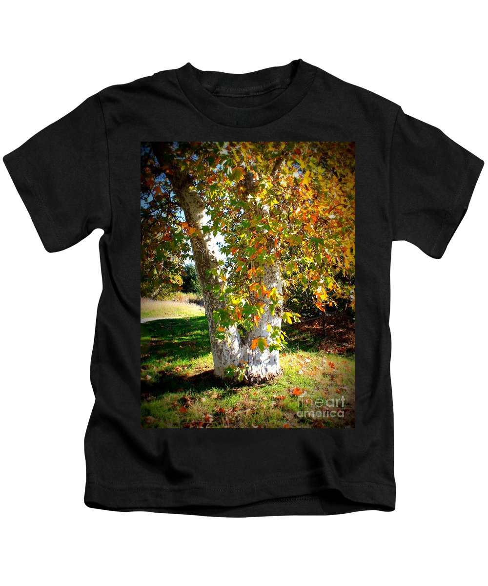 Autumn Tree Kids T-Shirt featuring the photograph Autumn Sycamore Tree by Carol Groenen