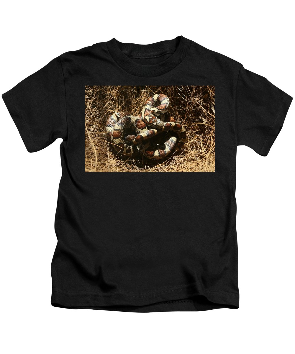 Snake Kids T-Shirt featuring the photograph Baby Corn Snake by Frank Guemmer