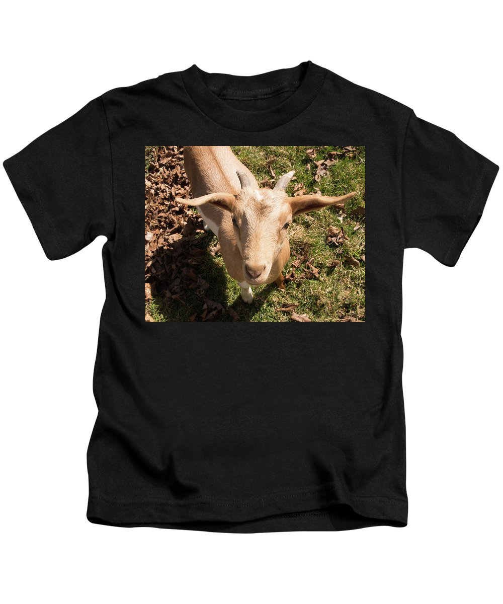 Goat Kids T-Shirt featuring the photograph Baby Goat by Diane Schuler