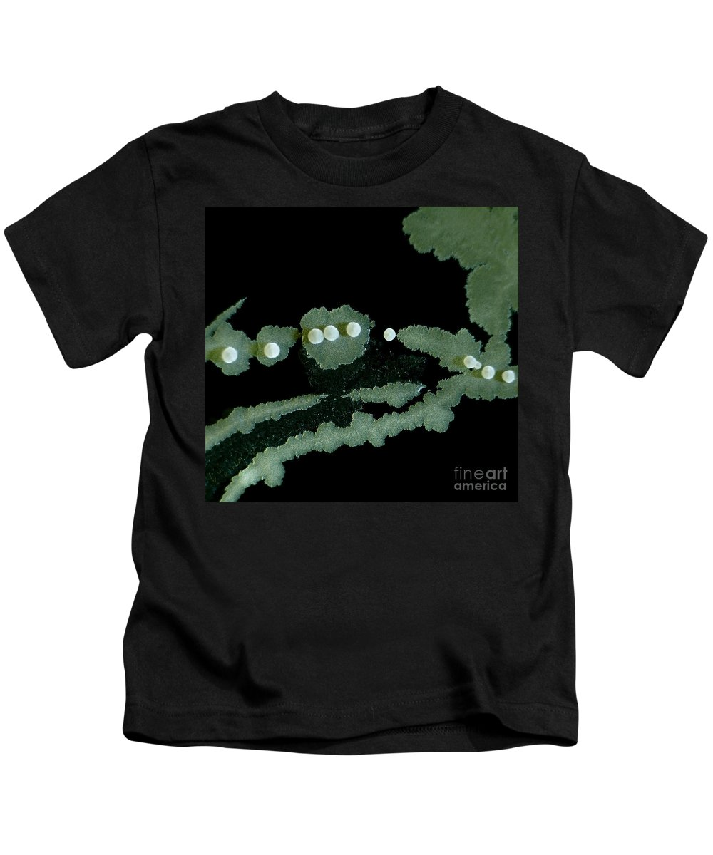 Colony Kids T-Shirt featuring the photograph Bacterial Colony, Lm by Rub�n Duro/BioMEDIA ASSOCIATES LLC