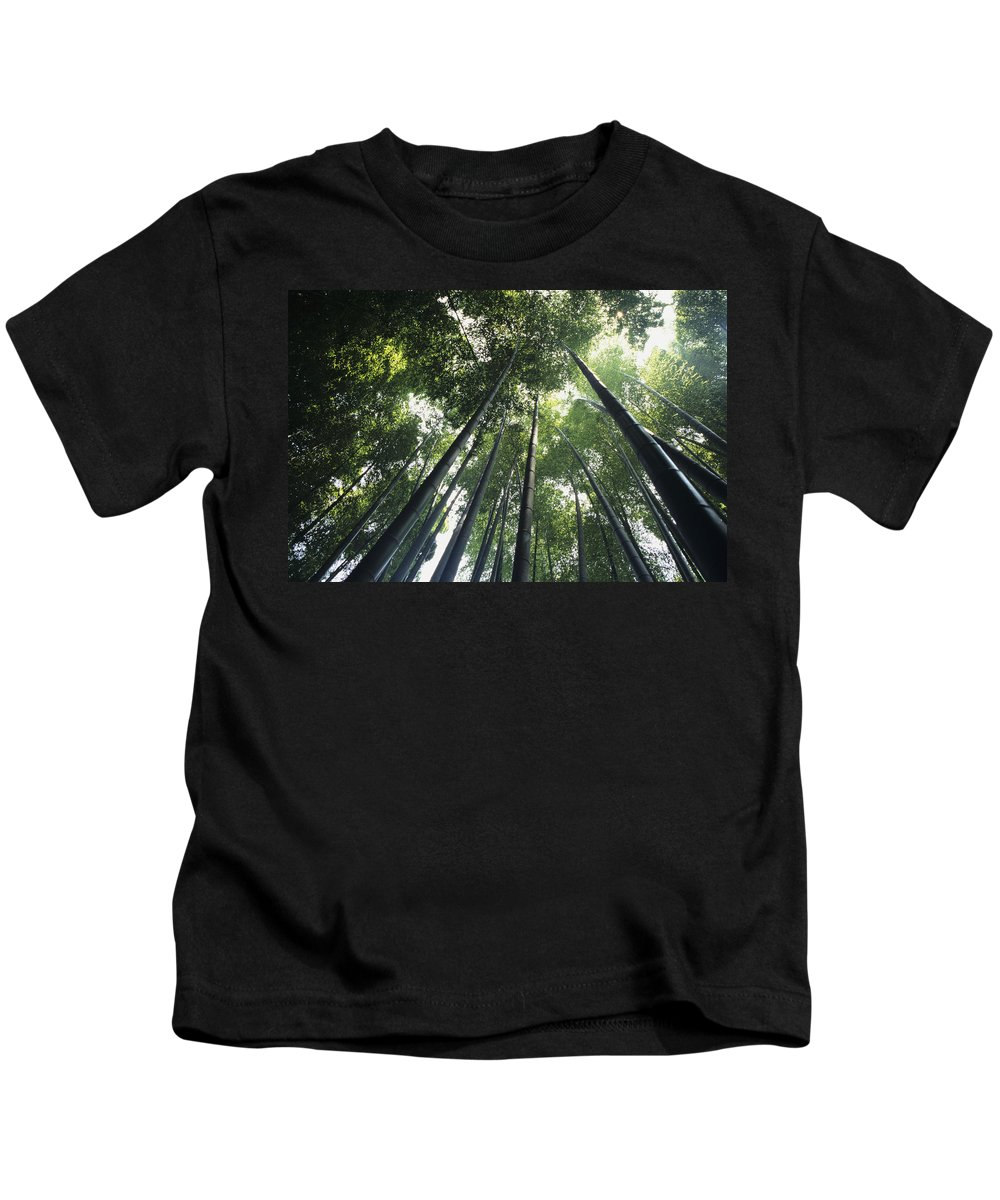 Area Kids T-Shirt featuring the photograph Bamboo Forest by Mitch Warner - Printscapes