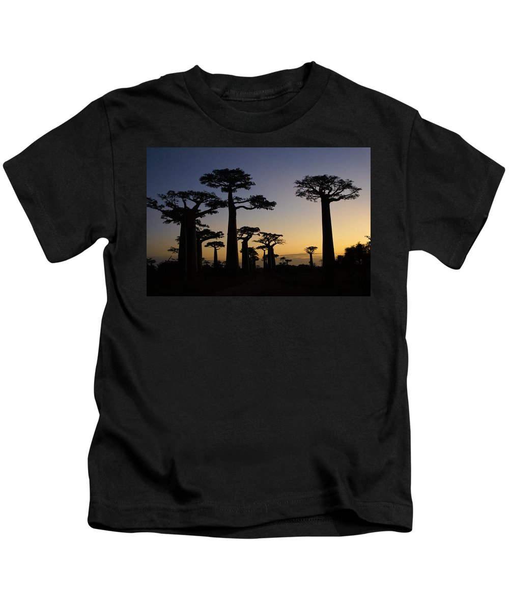 Madagascar Kids T-Shirt featuring the photograph Baobab Forest At Sunset by Michele Burgess