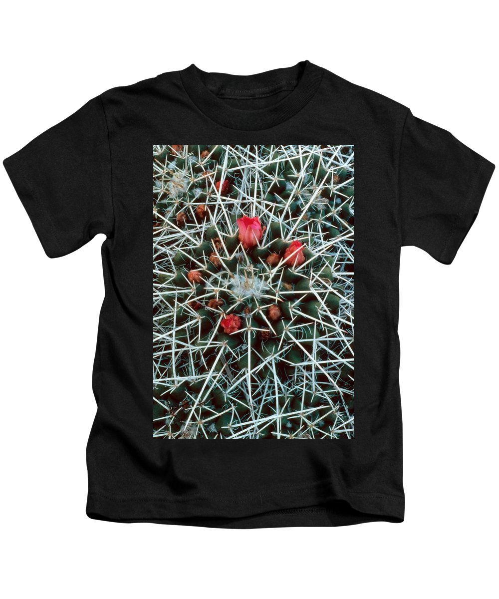 Barrel Cactus With Pink Blooms Kids T-Shirt featuring the photograph Barrel Cactus With Pink Blooms by Laurie Paci