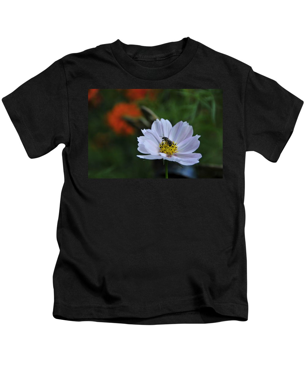 Bee Kids T-Shirt featuring the photograph Bee On Daisy by David Arment
