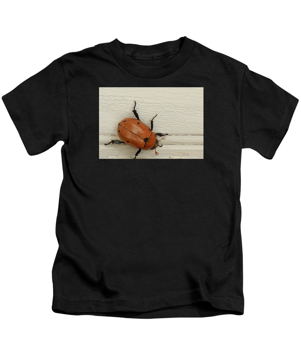 Beetle Kids T-Shirt featuring the photograph Beetle by Lisa Cassinari