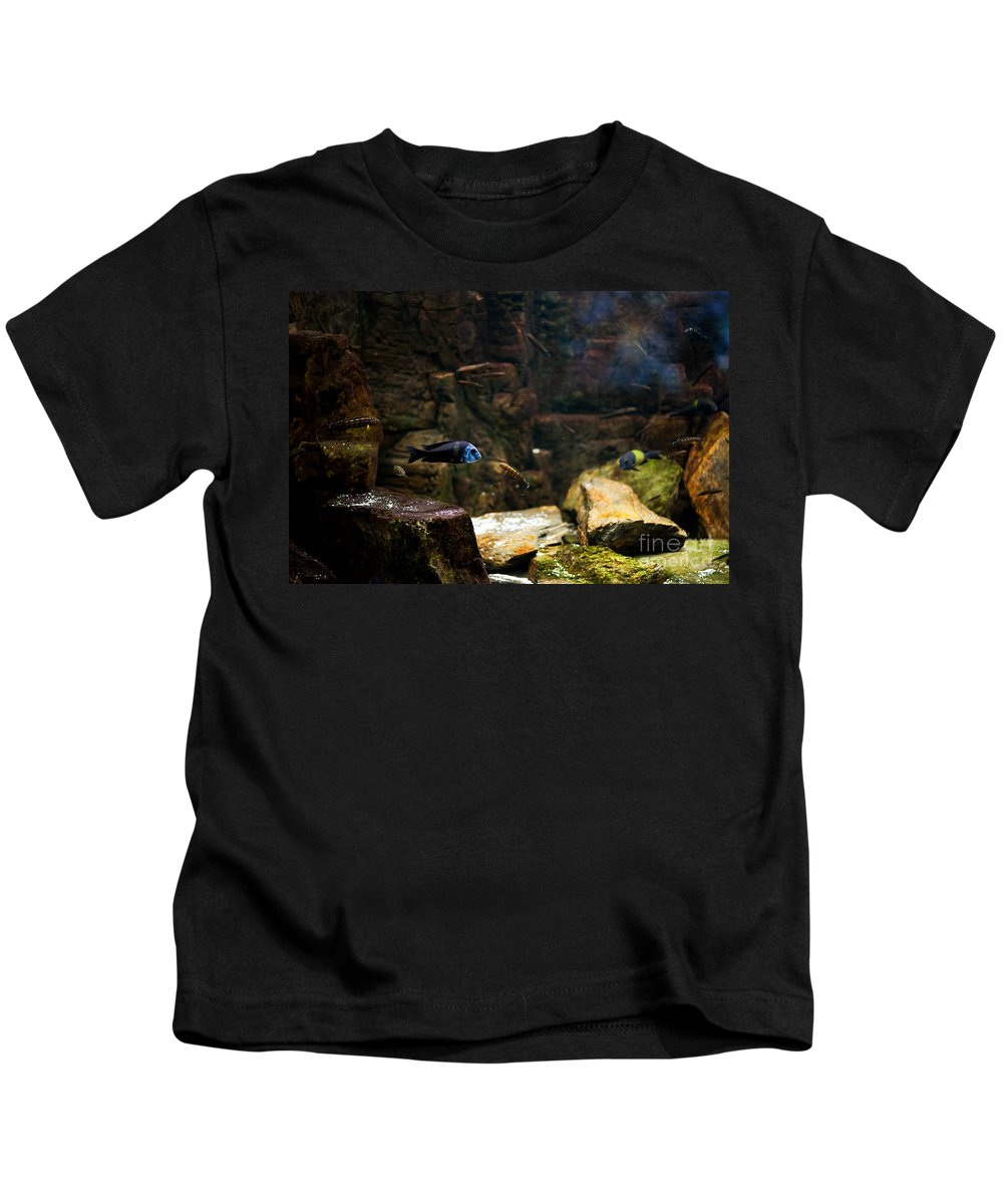 Zoo Kids T-Shirt featuring the photograph Blue Little Fish In Aquarium by Arletta Cwalina