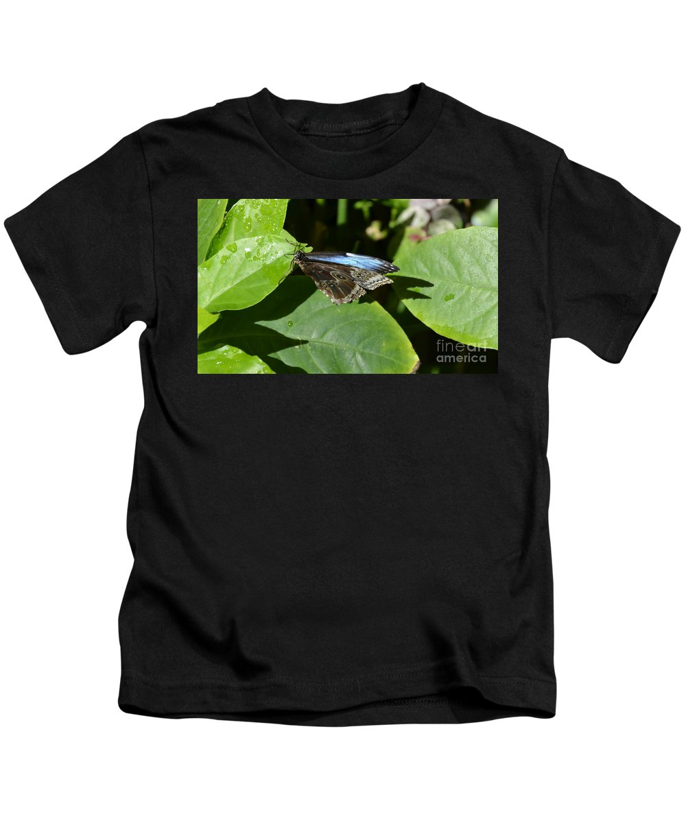 Blue Morpho Kids T-Shirt featuring the photograph Blue Morpho Among The Leaves by Mithayil Lee