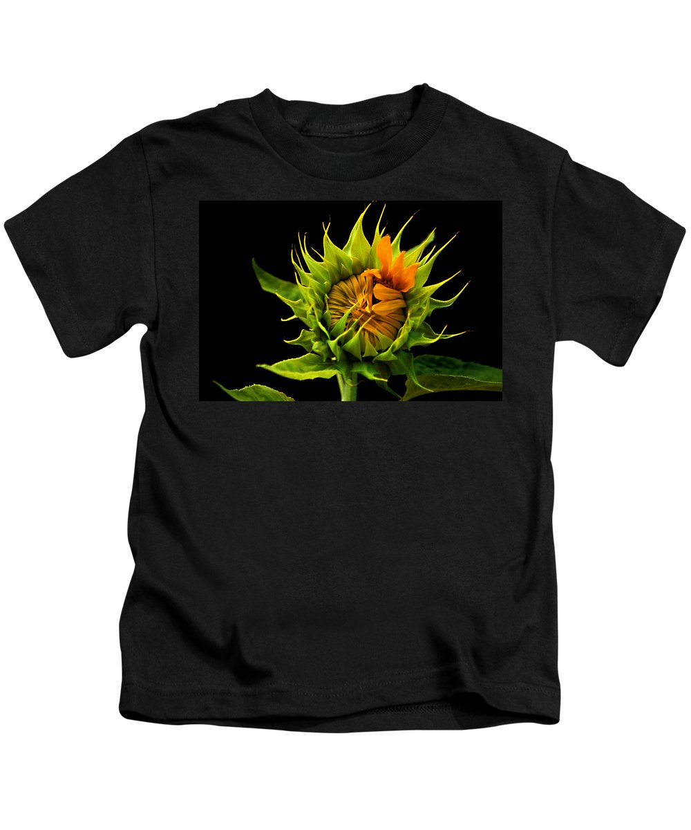 Gerber Daisy Kids T-Shirt featuring the photograph Budding Beauty by Laurie Paci