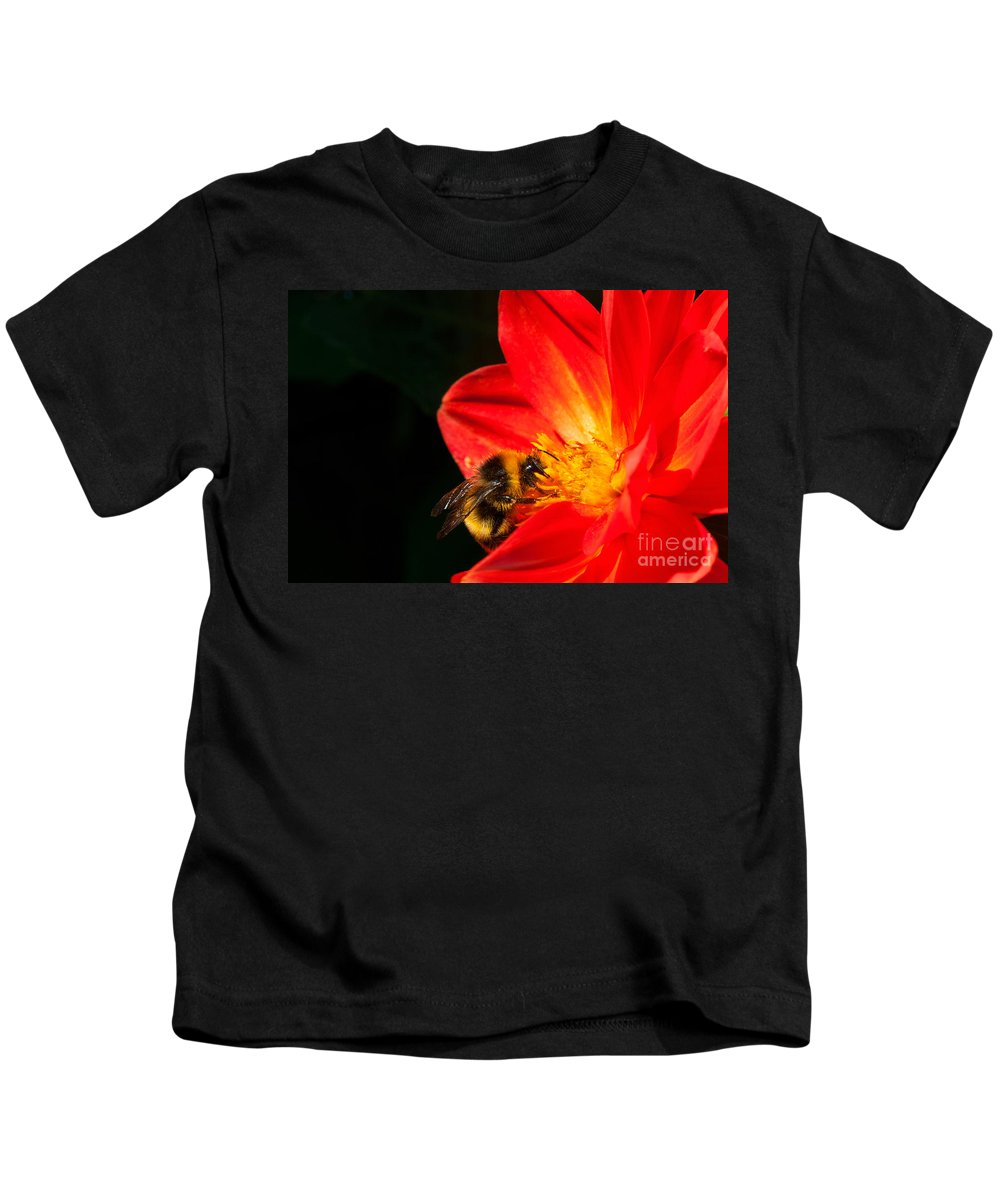 Bee Kids T-Shirt featuring the photograph Busy Bee by Diane Macdonald