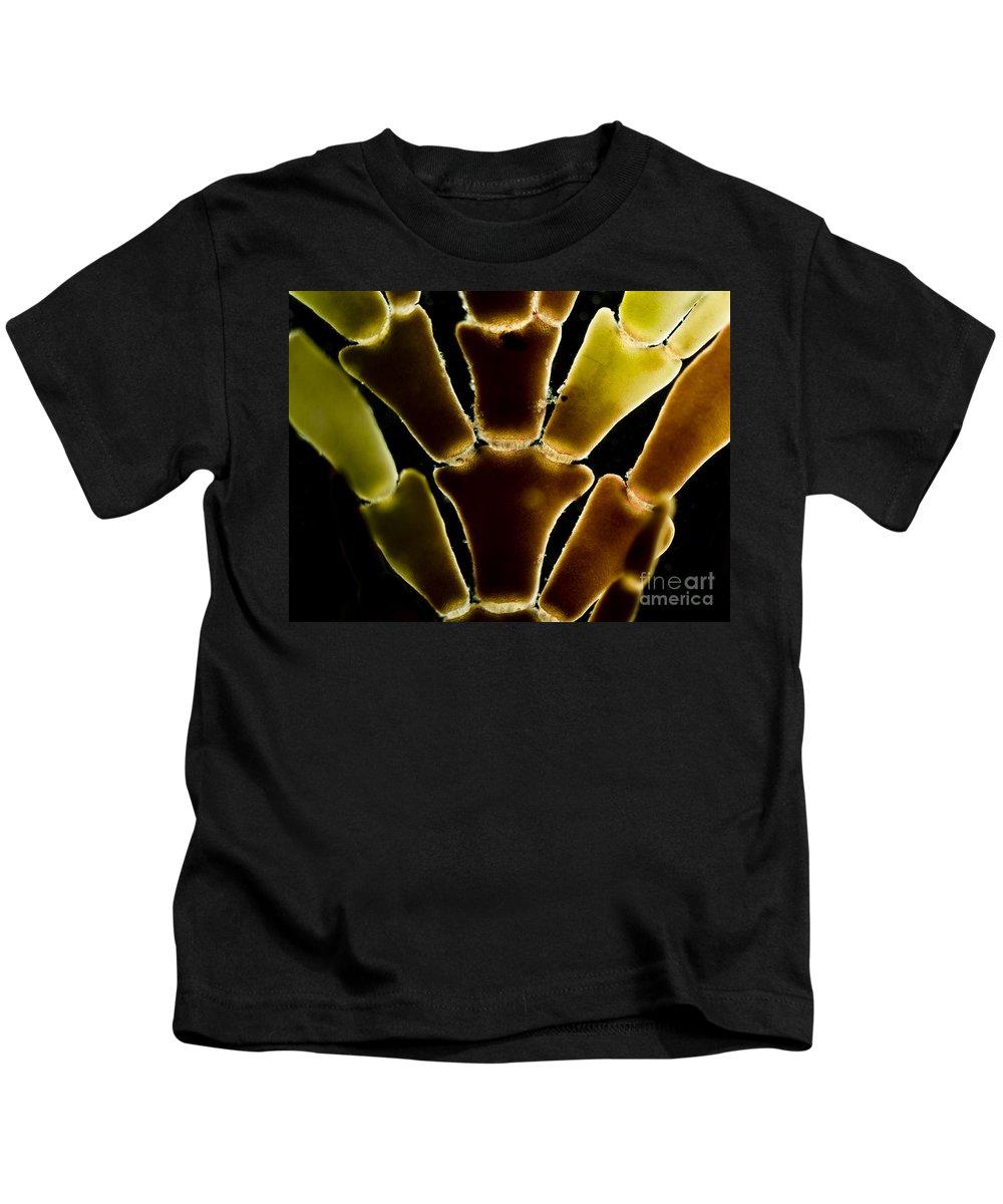 Science Kids T-Shirt featuring the photograph Calcareous Seaweed, Lm by Rub�n Duro/BioMEDIA ASSOCIATES LLC