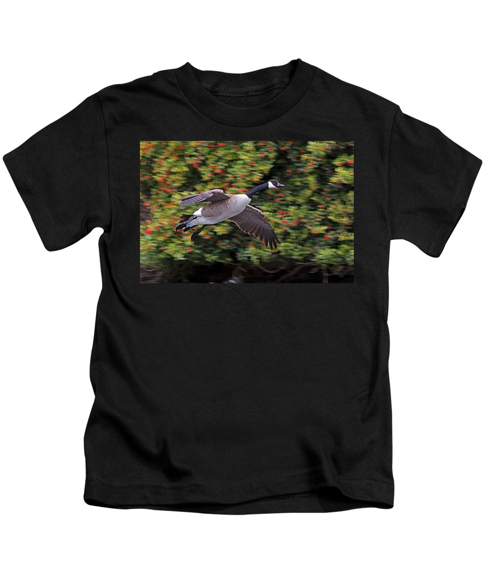 Canada Goose Kids T-Shirt featuring the photograph Canada Goose Landing by Randall Ingalls