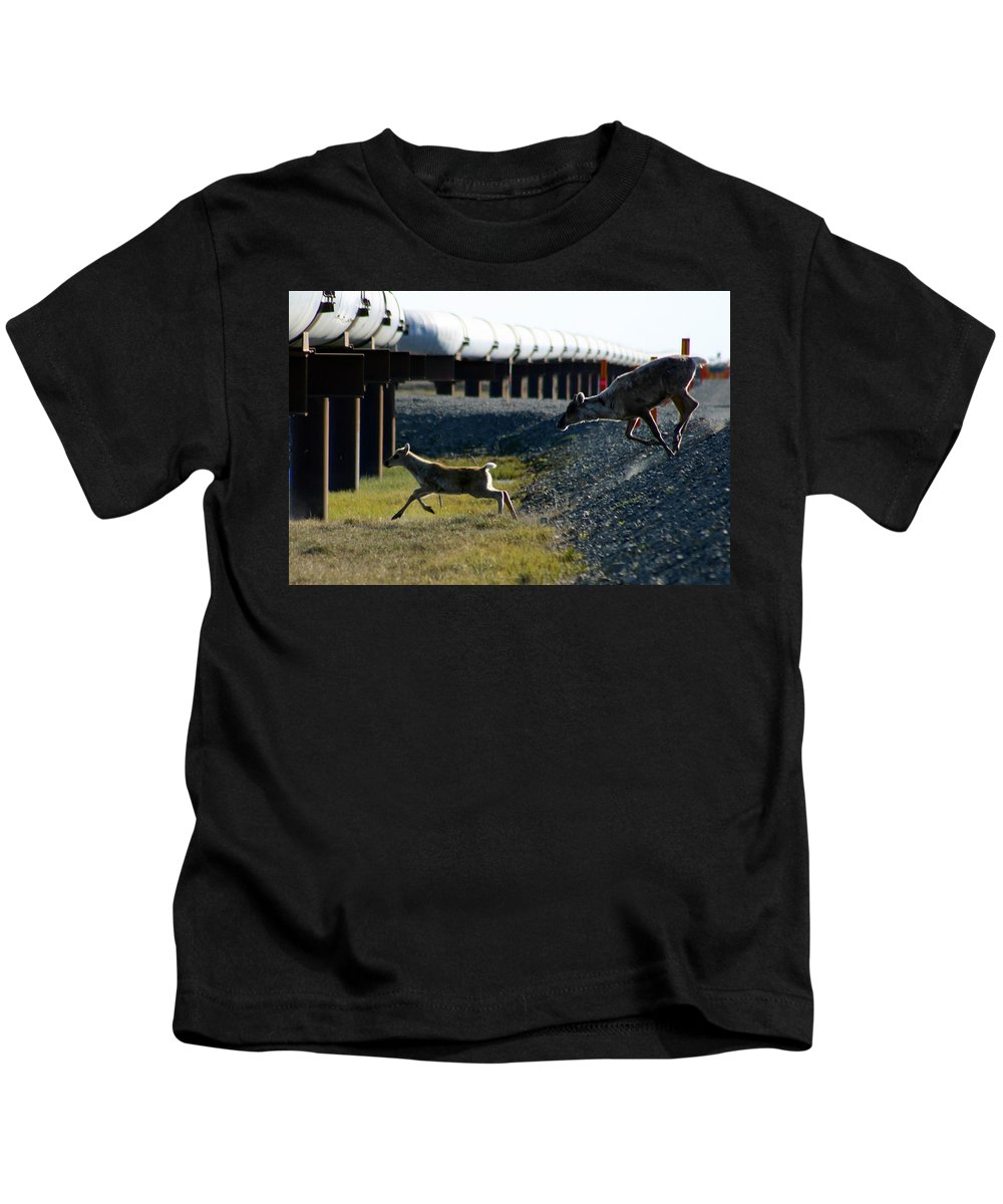 Caribou Kids T-Shirt featuring the photograph Caribou Cow And Fawn by Anthony Jones