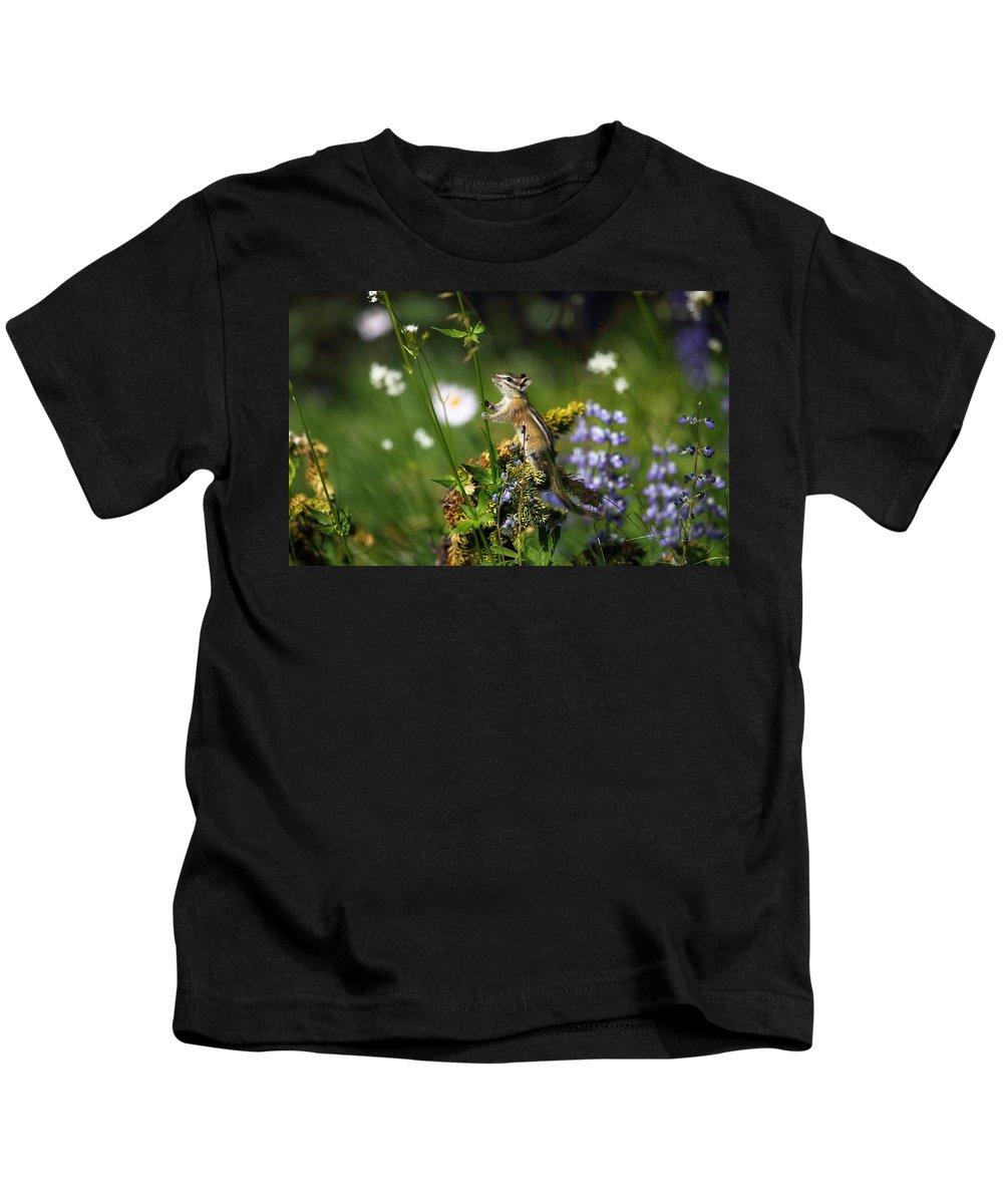 Chipmunk Kids T-Shirt featuring the digital art Chipmunk by Dorothy Binder