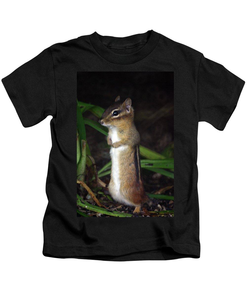 Chipmunk Kids T-Shirt featuring the photograph Chipmunk On Alert by Karol Livote