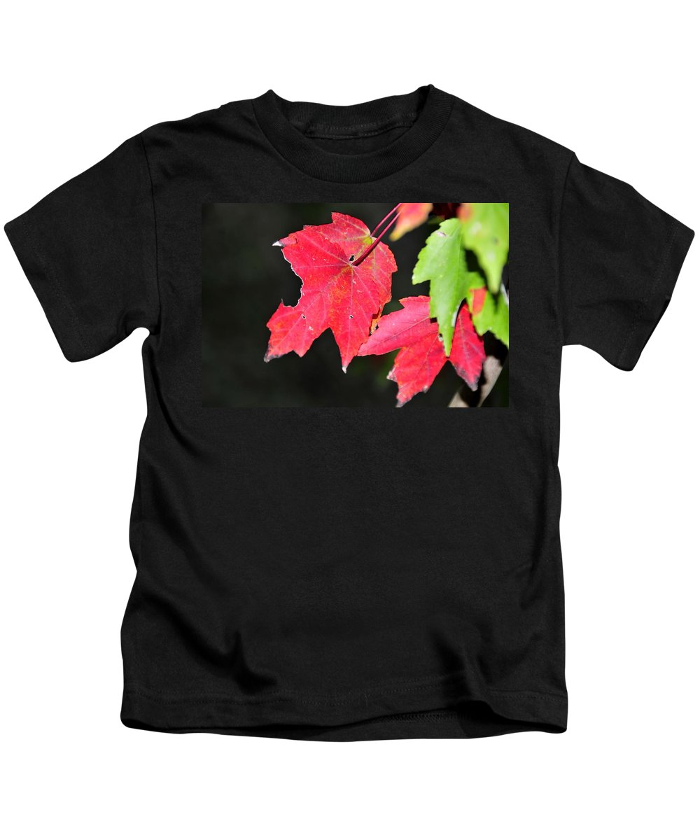 Leafs Kids T-Shirt featuring the photograph Christmas Leafs by David Lee Thompson