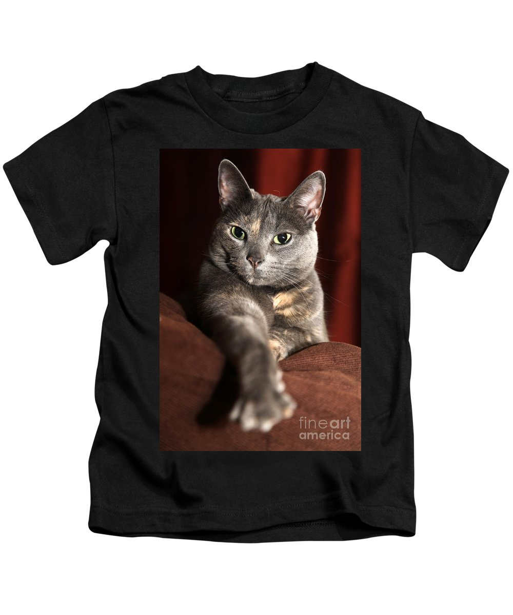 Kitty Kids T-Shirt featuring the photograph Come Here by Amanda Barcon