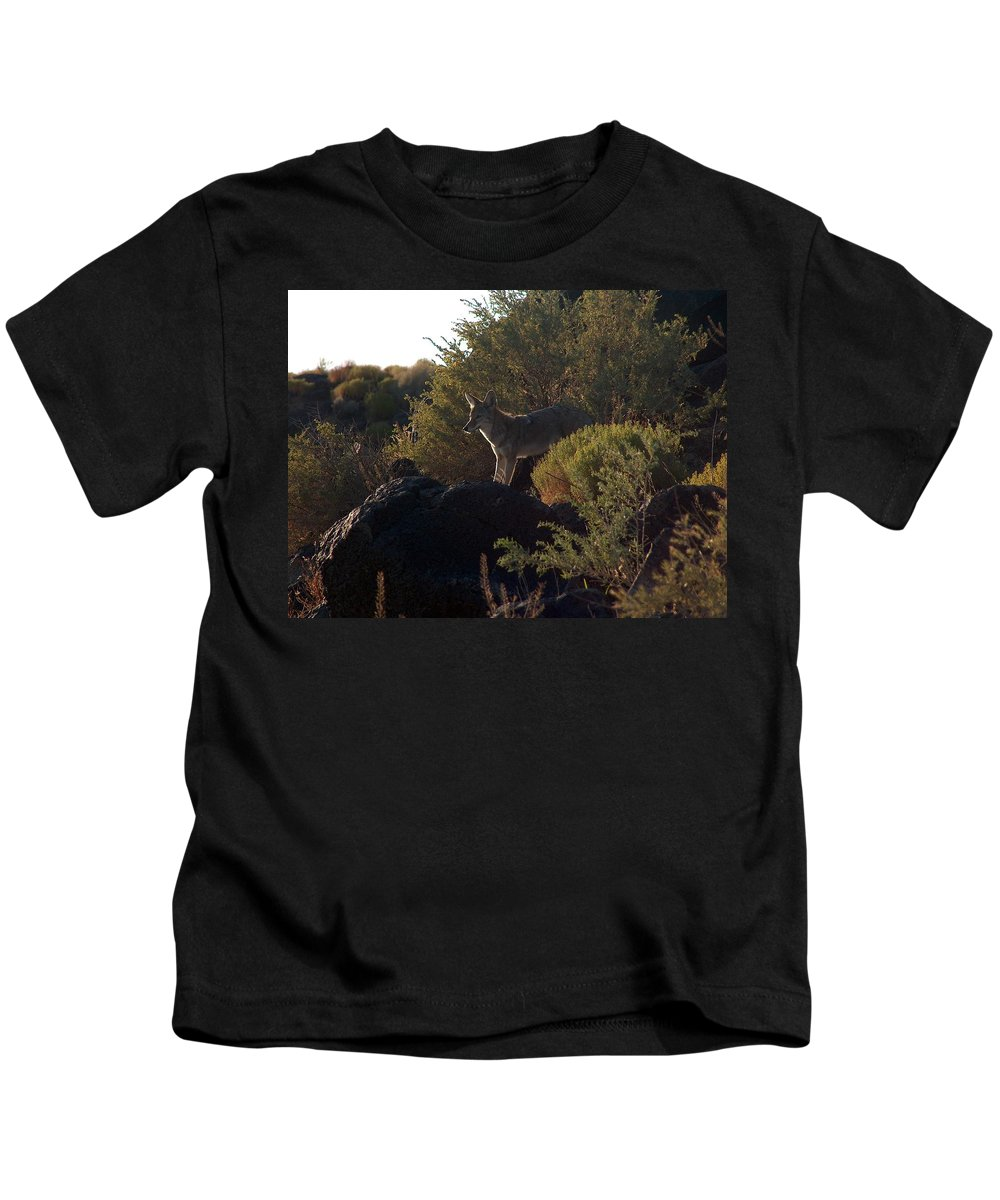 Coyote Kids T-Shirt featuring the photograph Coyote At The Petrogyphs 2 by Tim McCarthy