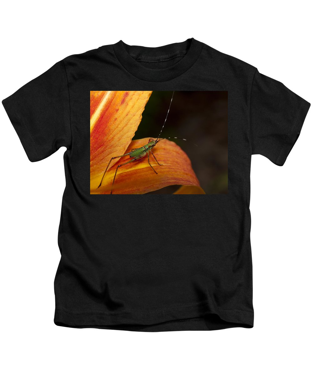 Day Lily Kids T-Shirt featuring the photograph Critter-1 by Charles Hite