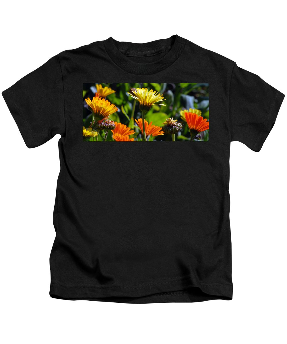 Dasy Kids T-Shirt featuring the photograph Daisies by Amy Fose